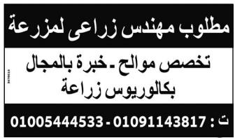 وظائف خالية من جريدة الوسيط عدد الجمعة 22/1/2021 15