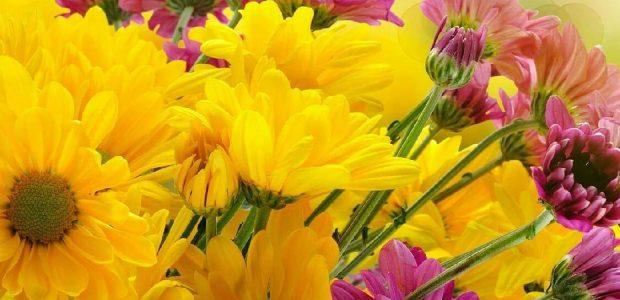 10 صور صباح الخير والورد مملوءة بالرومانسية والرقة للحبيب وللأصدقاء