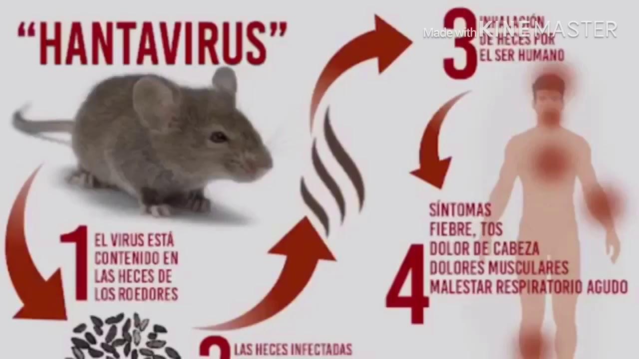 """""""بعد كورونا"""" فيروس هانتا يسجل أول وفاه في الصين وخضوع العشرات للفحص الطبي وأبرز أعراض الفيروس الجديد"""